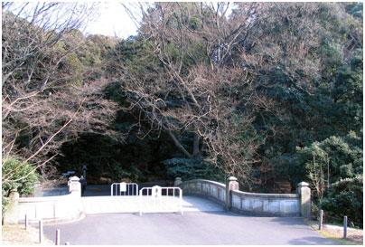 太鼓橋(明治神宮内)
